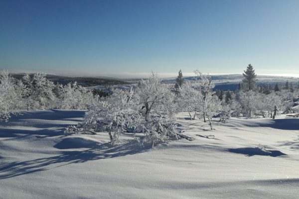 Lapland | Research Group Bartsch | APRI