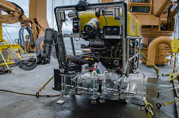 Global Explorer (ROV/NOAA) | Renate Degen | APRIA